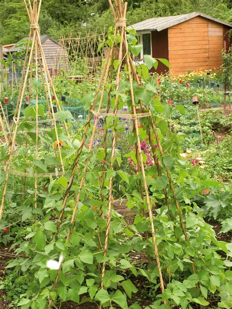 Combining Vegetables And Flowers In Your Garden Diy Vegetable And Flower Garden