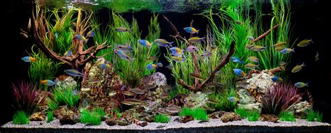 design vis aquarium freshwater aquariums design maintenance installation sales