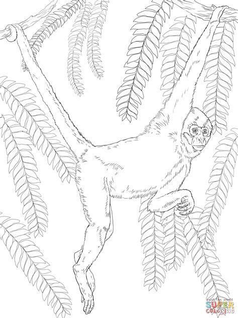 Dibujo de Mono Araña de Geoffroy para colorear | Dibujos