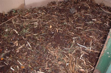 worm bedding pics for gt vermicomposting pit