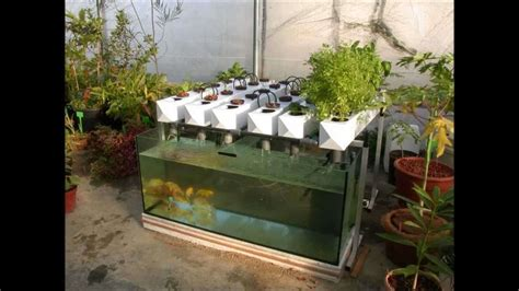 Outdoor Aquaponic Gardening System   Benefits Of Aquaponic