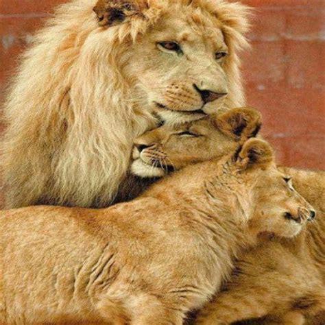 imagenes de la familia de animales fotos de la fe en dios newhairstylesformen2014 com