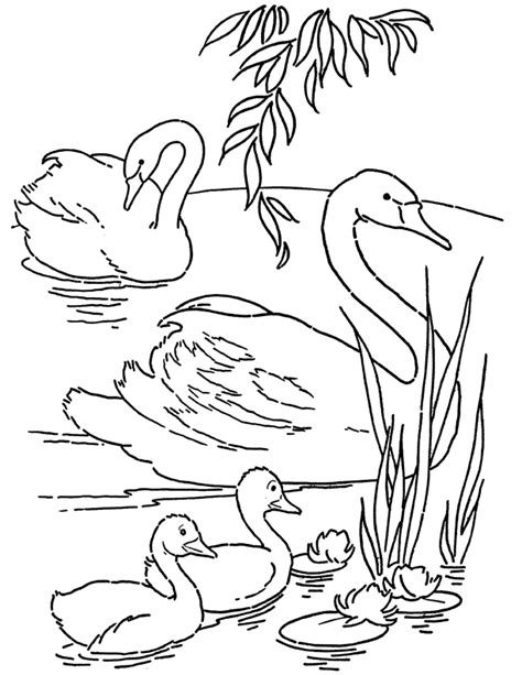 swan coloring pages free printable swans coloring page the graphics