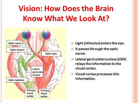 how does light pass through the eye human and robot sensors ppt video online download