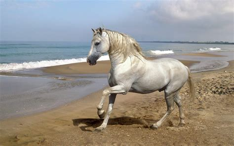 imagenes el blanco imagenes de caballos abril 2013