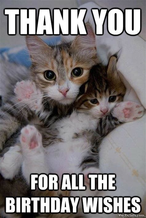 Thank You Cat Meme - thank you facebook graphics picgifs com