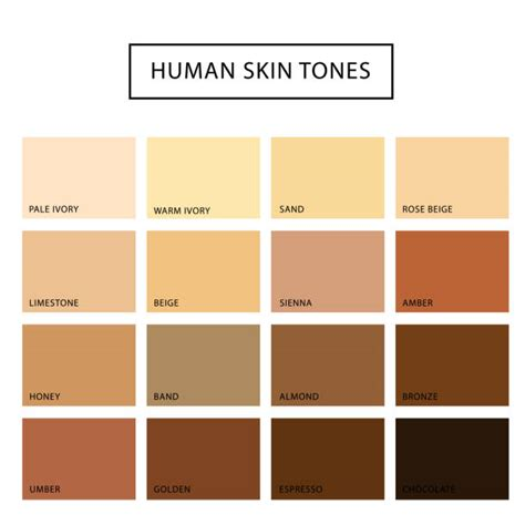 stock images similar to id 65616337 human skin macro texture royalty free skin tone clip vector images illustrations istock