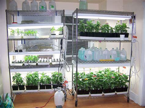 indoor shelving  grow lights microgreens