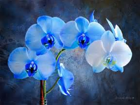 Marvelous Blue And Purple Wedding #3: Blue%20Orchids.jpg