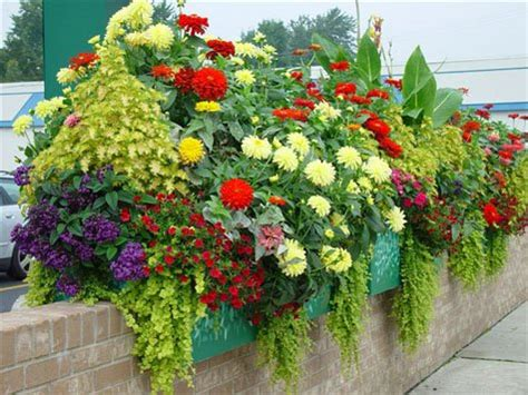 Flowers For Planter Boxes by World Is More Beautiful With Plants In Window Boxes Www