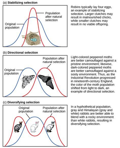 evolution by natural selection biology 1510 biological