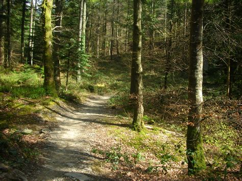 file michael spiller twisty forest paths by sa jpg