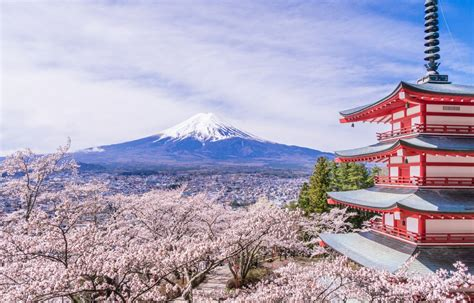 Japanese Damascus Kitchen Knives by The Shrine With The Best View Of Mount Fuji All About Japan