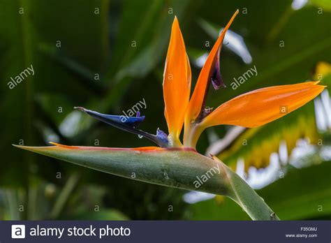 Origami Bird Of Paradise Flower - origami bird of paradise origami bird of paradise flower