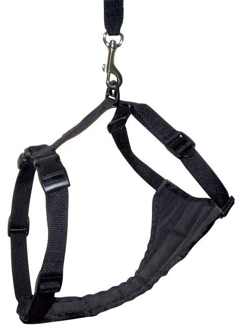 kurgo harness kurgo auto zip line and tru fit harness care 4 dogs on the go