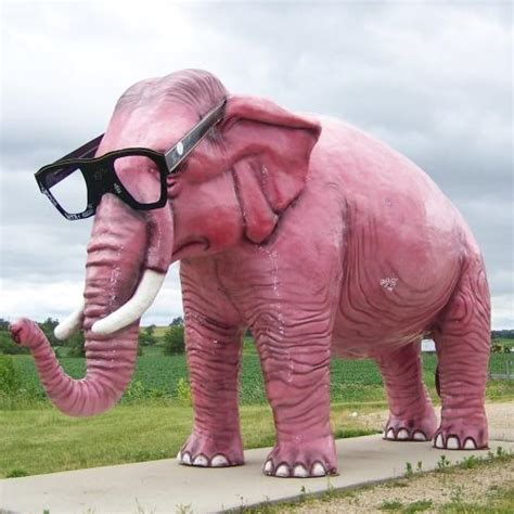 Big Pink Elephant In The Room by Why I Need More Therapy The Of Sheybani