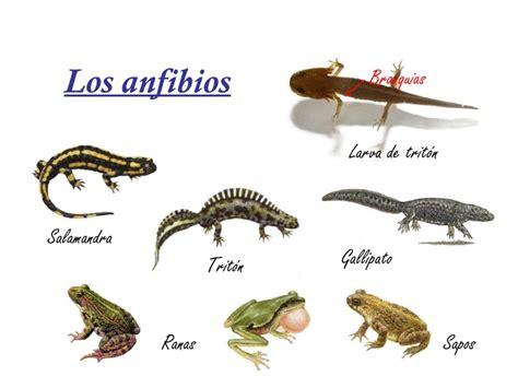 sistema de mam 237 feros depredadores aislado sobre blanco fotos de vertebrados mamferos aves fotos de reptiles los