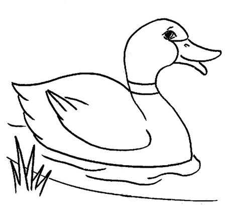 Duck Coloring Page duck coloring pages coloringpages1001