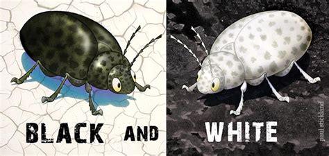 big bug  bug paul stickland