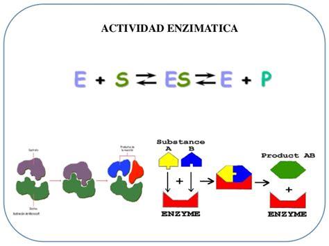 proteinas y enzimas proteinas y enzimas