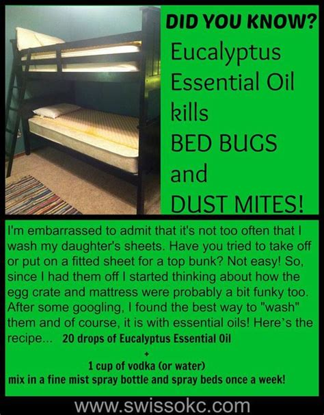 essential oil for bed bugs eucalyptus essential oil bed bugs and essential oils on