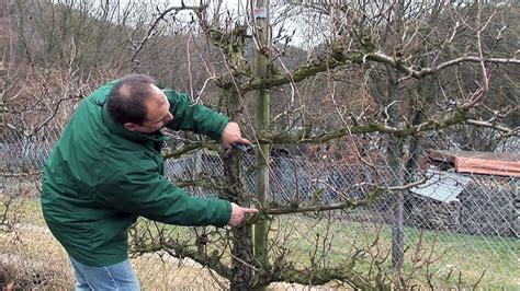 bäume schneiden wann erlaubt hecke schneiden wann 25 best ideas about hecke schneiden