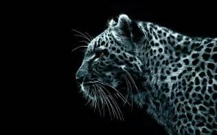 animals snow leopard desktop wallpaper nr 38129 by