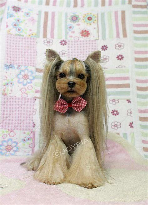 yorkie poo grooming styles pictures how to groom a yorkie poo breeds picture