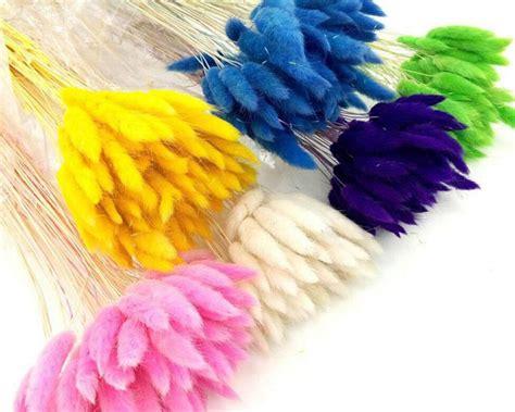 fiori secchi ingrosso fiori secchi ingrosso produzione di fiori secchi a