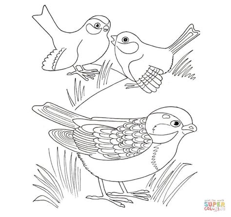 Sparrow Coloring Page Free Printable Coloring Pages Sparrow Coloring Pages