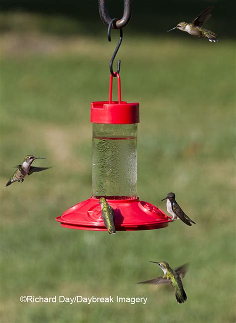 dr jb s hummingbird feeder a bottle style feeder that