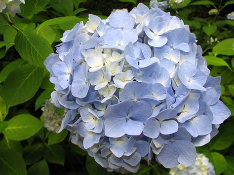 most common garden flowers the 15 most beautiful flowers in the world trawel india