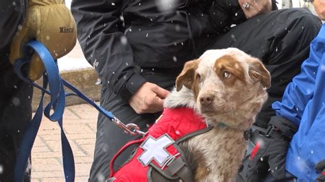 ksl dogs rescue ready to return the favor as avalanche ksl