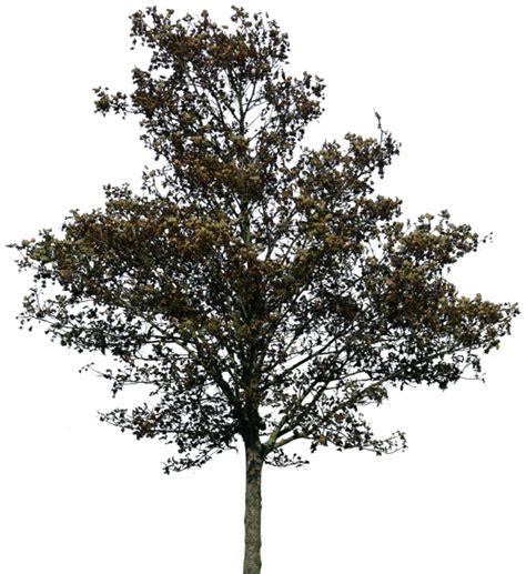 tree pattern png tree 36 png by gd08 deviantart com on deviantart