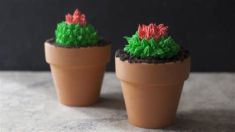 Planters Recipes by Cactus Cupcakes In Terra Cotta Pots Look Like The Real Thing
