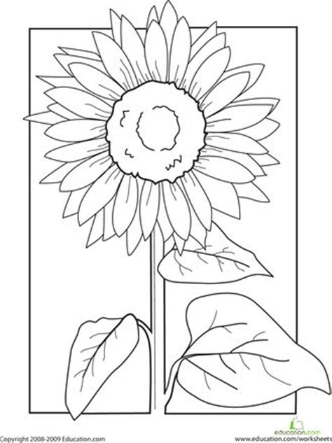 patterns in nature worksheet color the sunflower the sunflower colors and the o jays