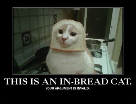 Cat In Bread Meme - image 243064 cat breading know your meme