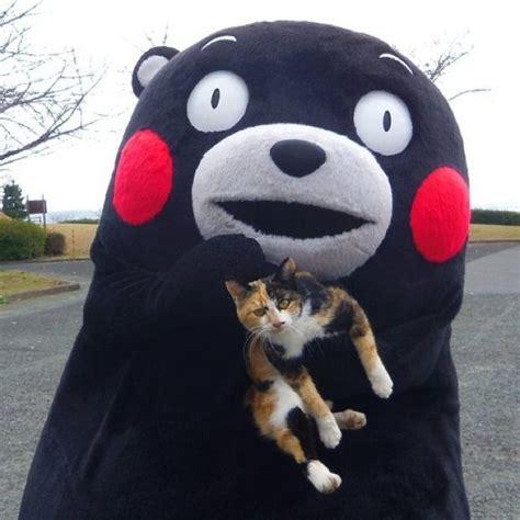 Kumamon Meme - 65 best kumamon images on pinterest kawaii kumamoto and