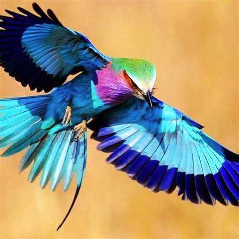 libro las aves exticas mi las aves mas ex 243 ticas del mundo sam77sam77 en