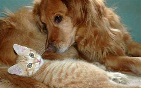 wallpaper cat dog cats and dogs wallpapers wallpaper cave
