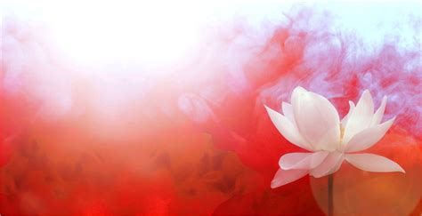 Colour Lotus Lotus Flower With Background Color Co