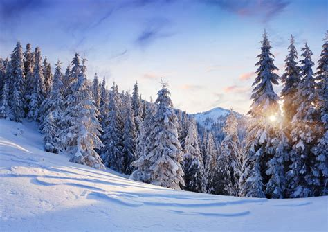 nature winter snow mountain tree christmas tree spruce sky