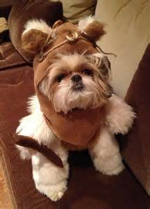 ewok costume for shih tzu 25 best ideas about ewok costume on names for teddy bears shih tzu