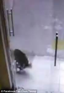 cat runs into door crashes into glass door on while chasing a cat