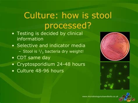 Stool Culture Ppt by Ppt Nuts Bolts Of Microbiology Session 3 Powerpoint