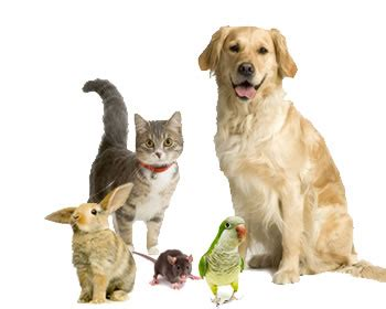 how to get cats and dogs to get along cats and dogs not getting along 5 tips to help your pets get along