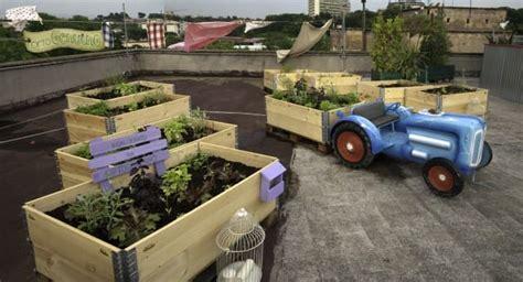 coltivare in casa senza lade come coltivare orto sul balcone senza alcuna esperienza