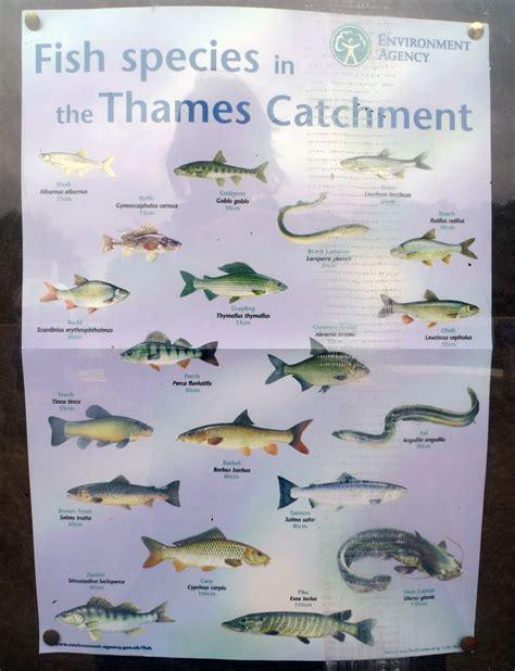 thames river fishing map river runs 187 fishing in water