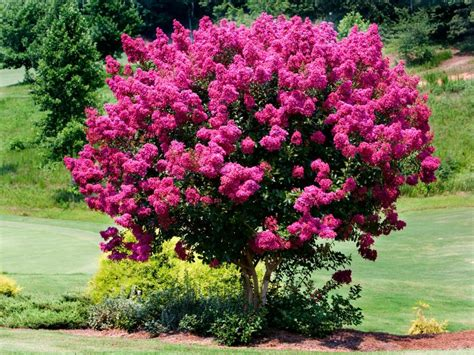 best tree to plant in backyard 100 best tree to plant in front yard backyard trees