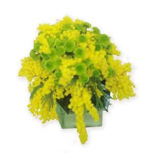 mimosa in vaso mimosa e santini consegna fiori a domicilio